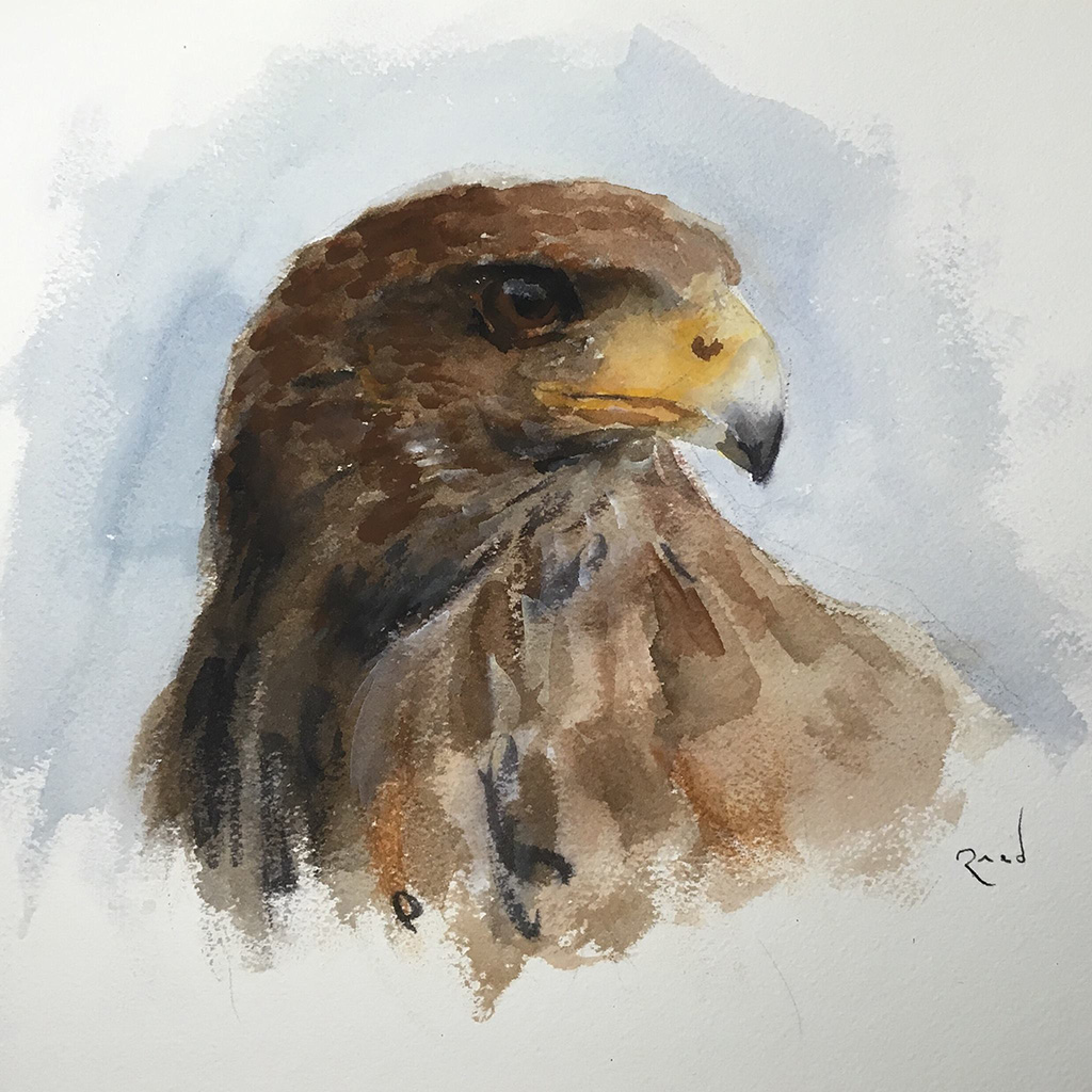 Hawk in watercolors