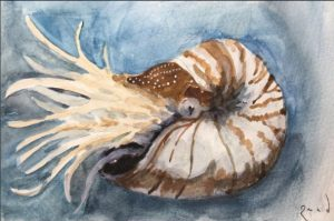 Nautilus in watercolors and gouache